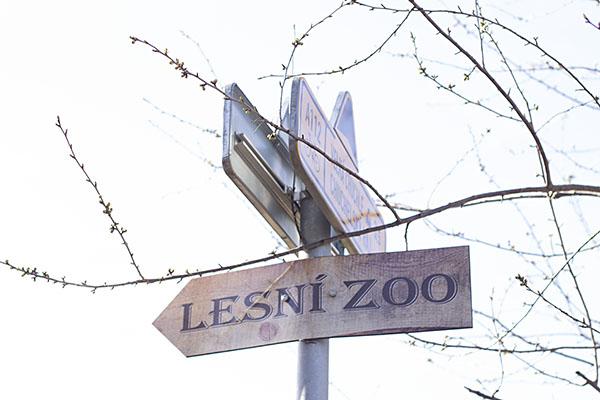 lesni zoo
